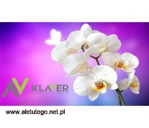 Prace pielęgnacyjne przy kwiatach doniczkowych- praca w Holandii od zaraz